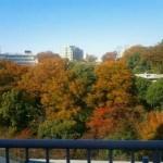 【リノベ向き物件】最上階で感じる四季折々@江戸川橋