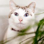 ピックアップ特集記事公開|猫LOVEな家