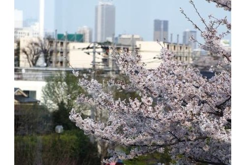【物件紹介】ゆったりと桜を眺める